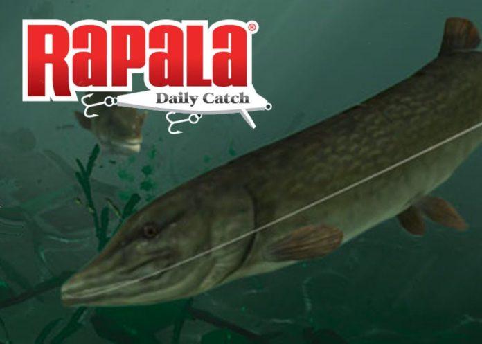 Rapala Fishing - Daily Catch APK Mod